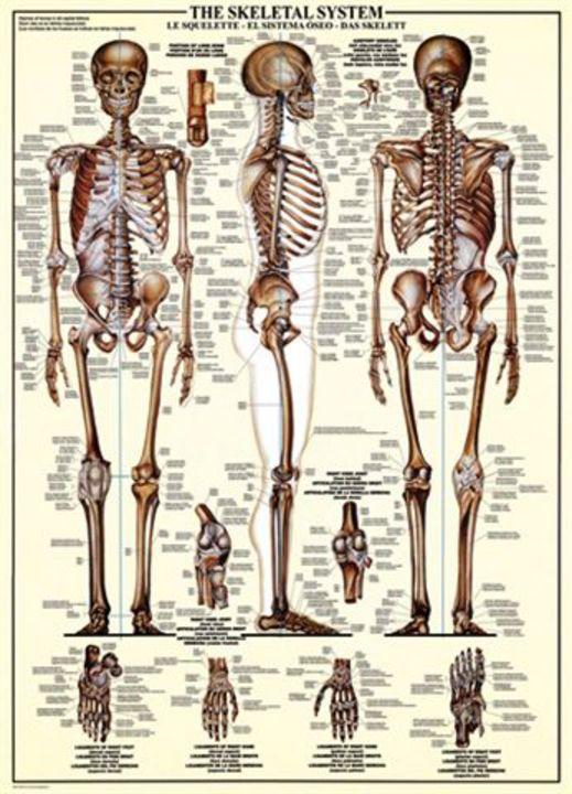 Das Skelett - Puzzle [1000 Teile] - ab 1000 Teile online bestellen ...